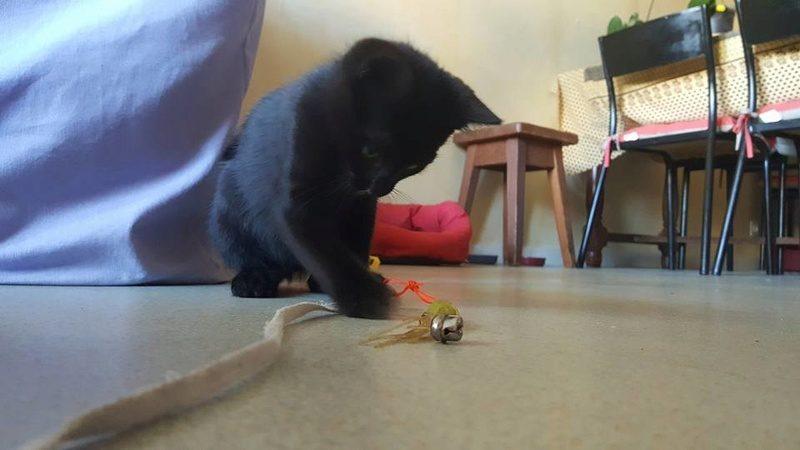 NANO – chaton 3 mois