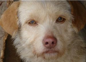 Jimboy mâle croisé Griffon 2 ans et demi