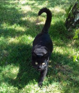MIMI jeune chatonne noire