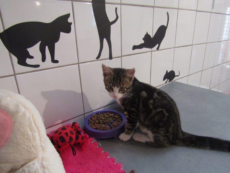 NIPTON – chaton  –  4 mois
