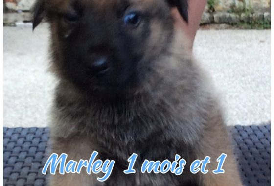 Marley 31 07