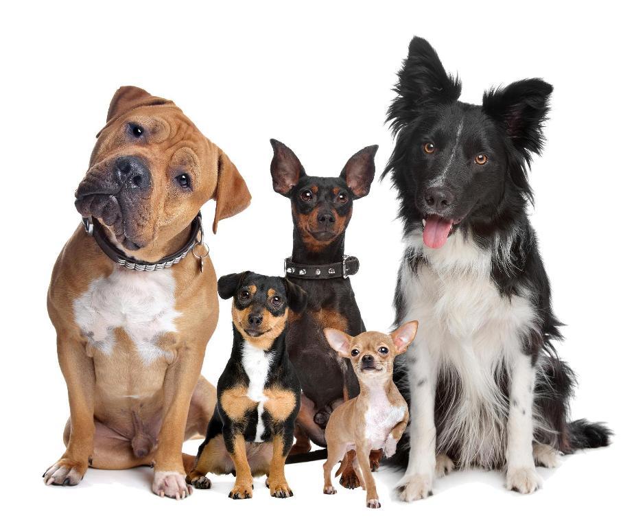 adopter un chien association galia. Black Bedroom Furniture Sets. Home Design Ideas