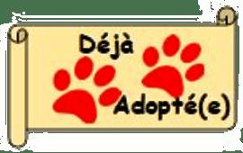 Déjà Adopté(e)