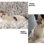 Association Galia • Pixel & Rosy