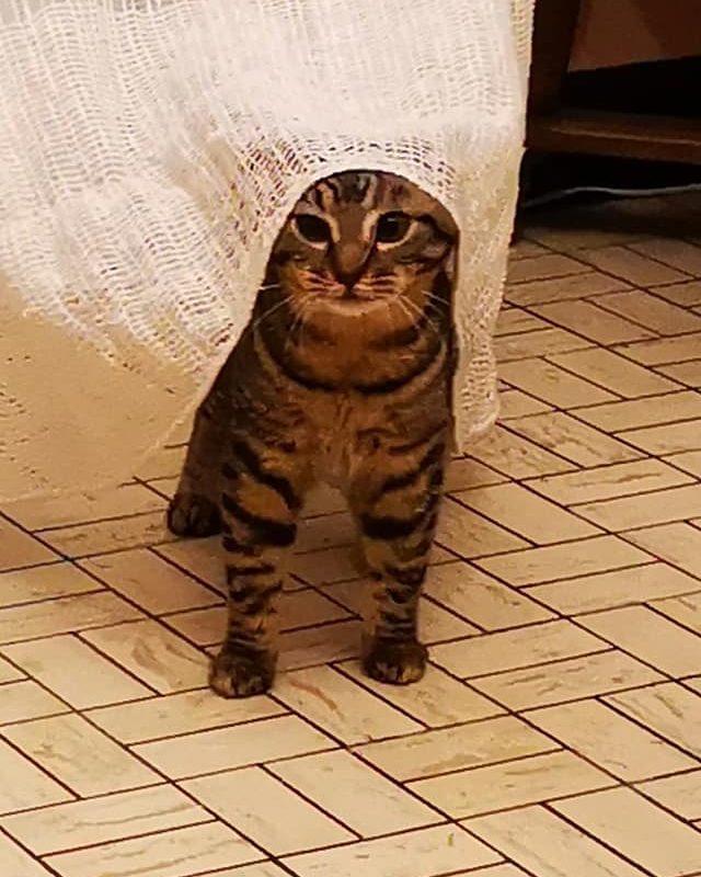 SAMY – né le 01/06/20 – adorable chaton