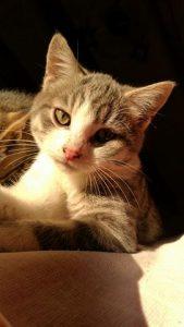 Noah chat aventureux - 9 mois