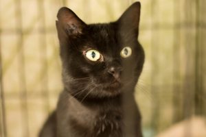 MIKE - jeune chat indépendant