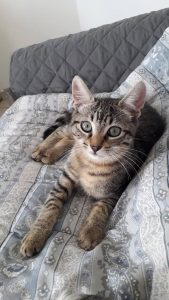 SQUAT - 4 mois - adorable chaton
