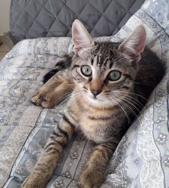 SQUAT – 4 mois – adorable chaton