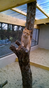 NOISETTE  -  3 ans 1/2  - gentille chatte discrète