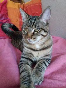 NUT jeune chat curieux