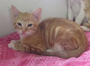OSLO - 3 mois - chaton joueur