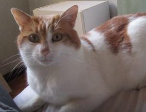 MALLEY - 3 ans - chat bien calme