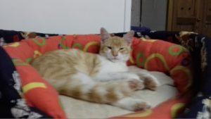 PURDY - chaton doux et timide
