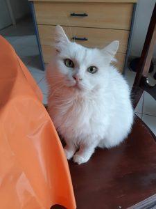 PALOMA - 4 ans 1/2 - jolie chatte très indépendante