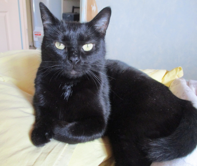 OLIVE – 8 mois – chatonne câline