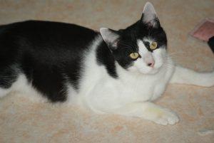 FILOU - 10 mois - jeune chat joueur