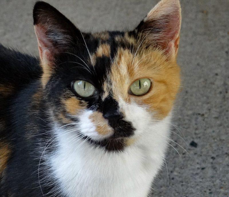 HOLIE – 6  ans – petite chatte rescapée