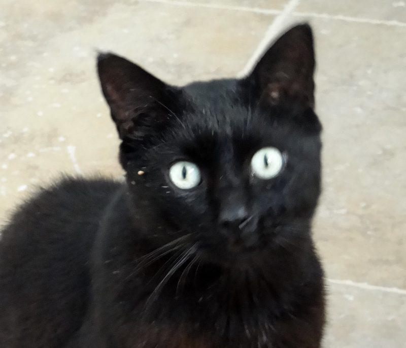 MARCEL – 5 ans – chat plein de vie !