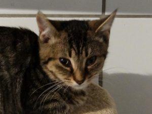 OPUS - 1 an  - jeune chat craintif