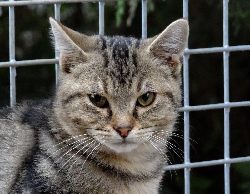 ORIGAN – 5 mois – chaton à apprivoiser