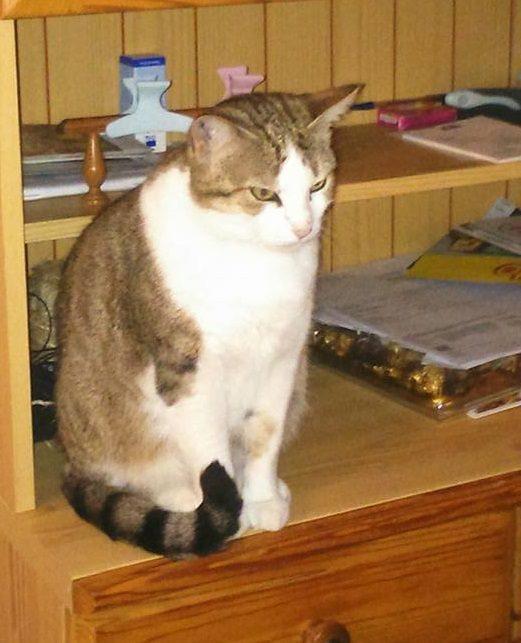 IROISE grande chatte bien douce