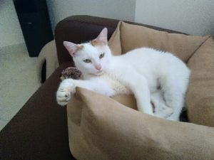 PRISCA - 4 ans 1/2 - chatte exclusive