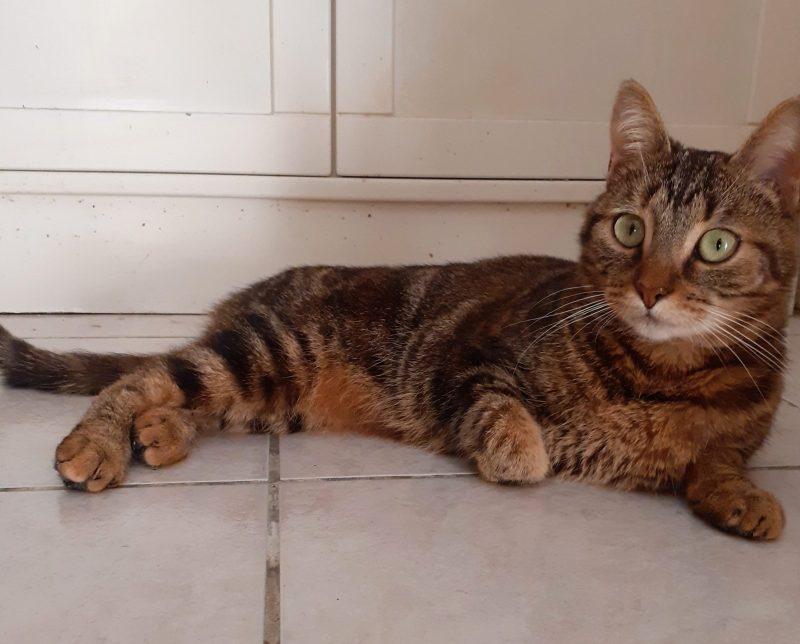 PRINCESSE – jolie chatte joueuse – née le 01/10/2019