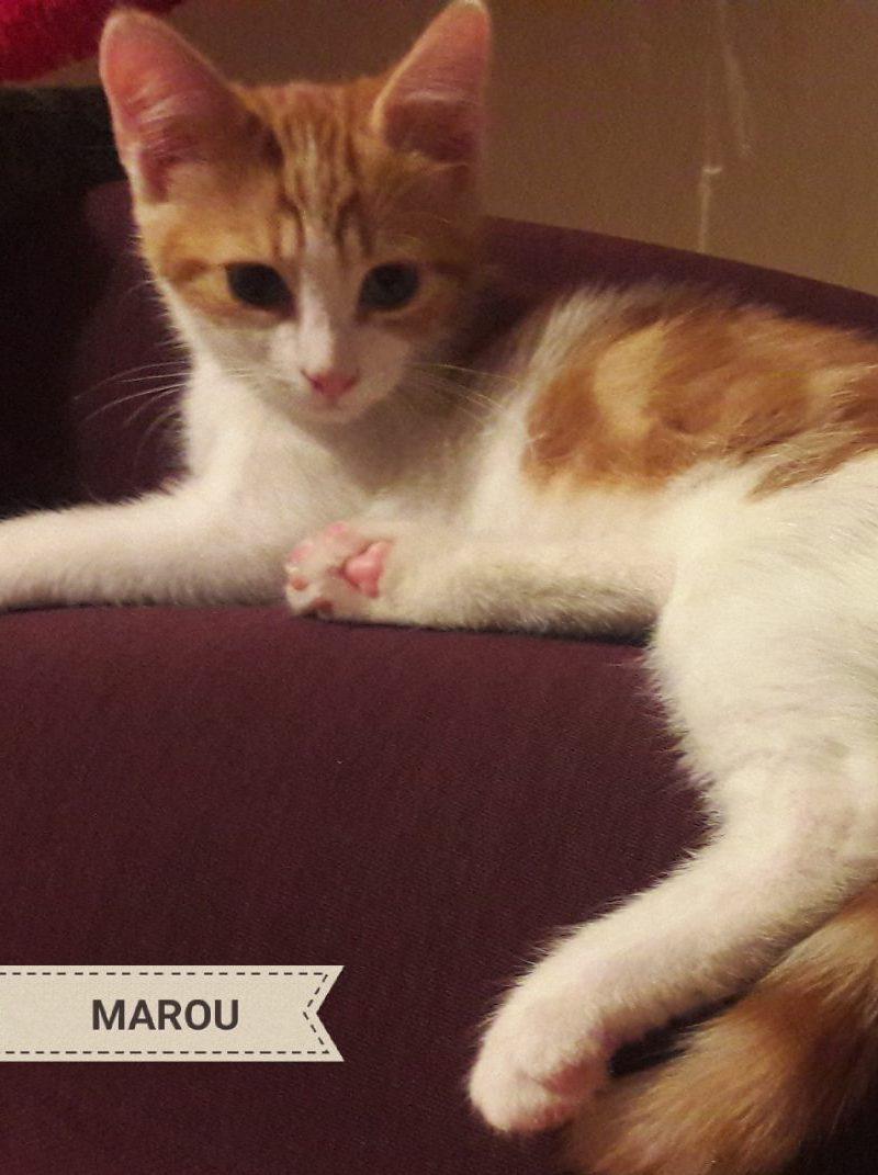 MAROU – chaton 3 mois