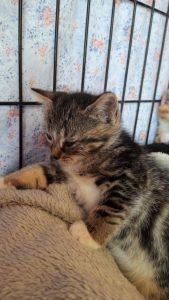 chatons env 2 mois A RESERVER