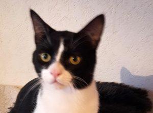 ARAMIS -1 an - jeune chat câlin