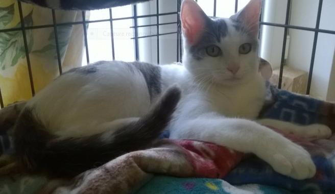 BOBBY – né le 15/04/2020 – un amour de jeune chat