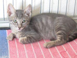 PORTO – 3 mois 1/2 – très joli chaton