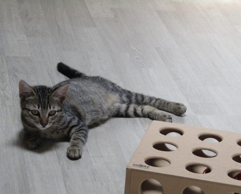 OANNA – 3 mois 1/2 – chatonne boîte à ronrons