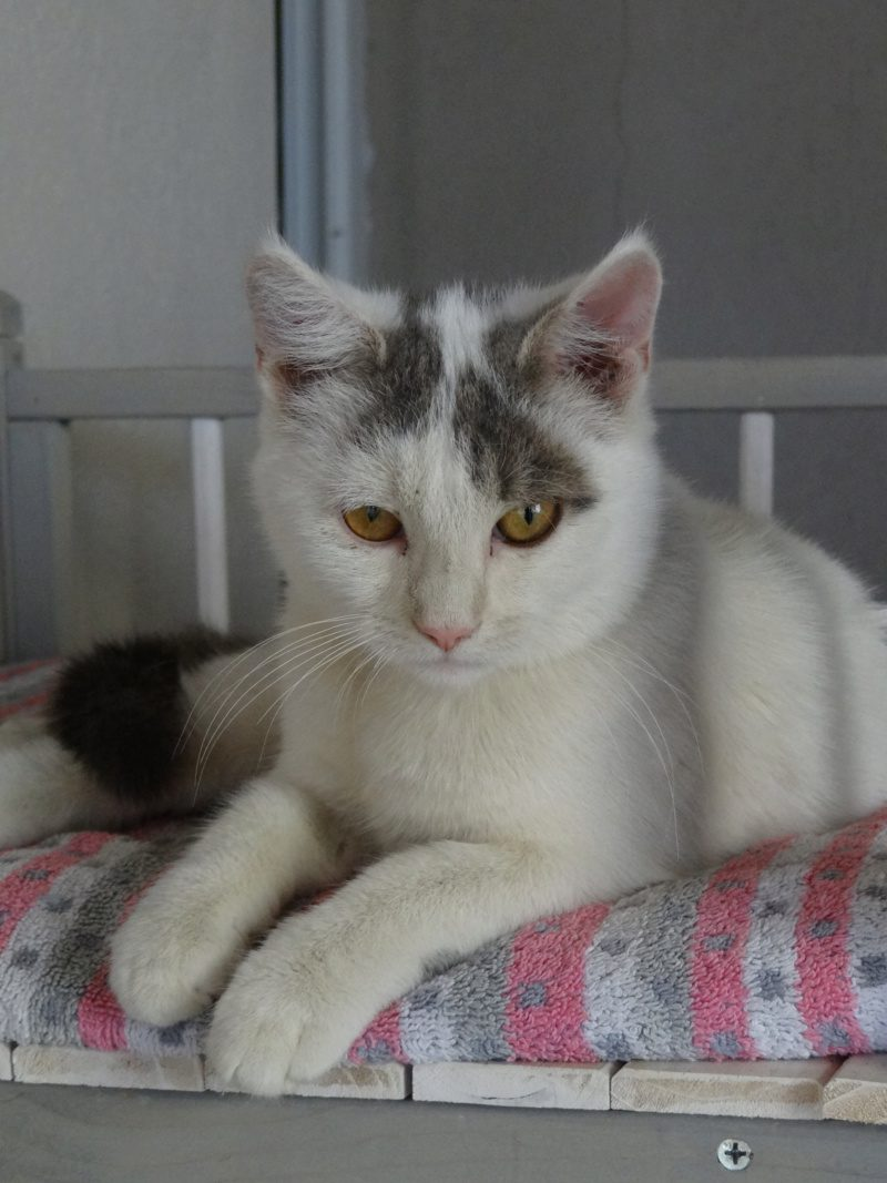 SACHA – 6 mois – jeune chat tout doux/tout rond