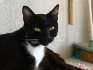 TIAGO - 1 an - grand chat indépendant