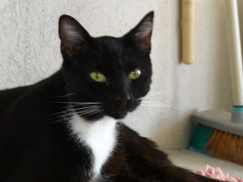 TIAGO – 1 an – grand chat indépendant