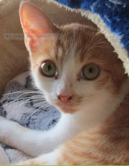 ENZO – 4 mois 1/2 – chaton joueur