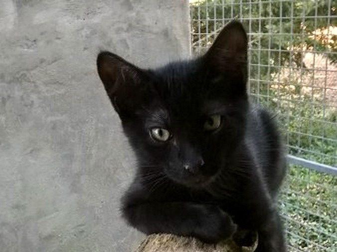 FELIX – 7 mois – chaton timide