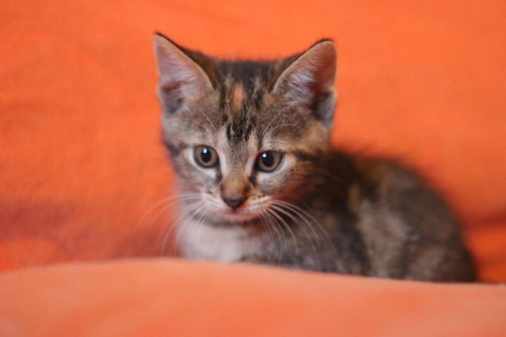 Nala chatonne de 2 mois et demi association galia - Couper les griffes d un chaton de 2 mois ...