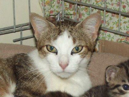 IROISE – 1 an – grande chatte bien douce