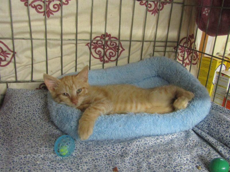 OLY – 3 mois  – chaton adorable