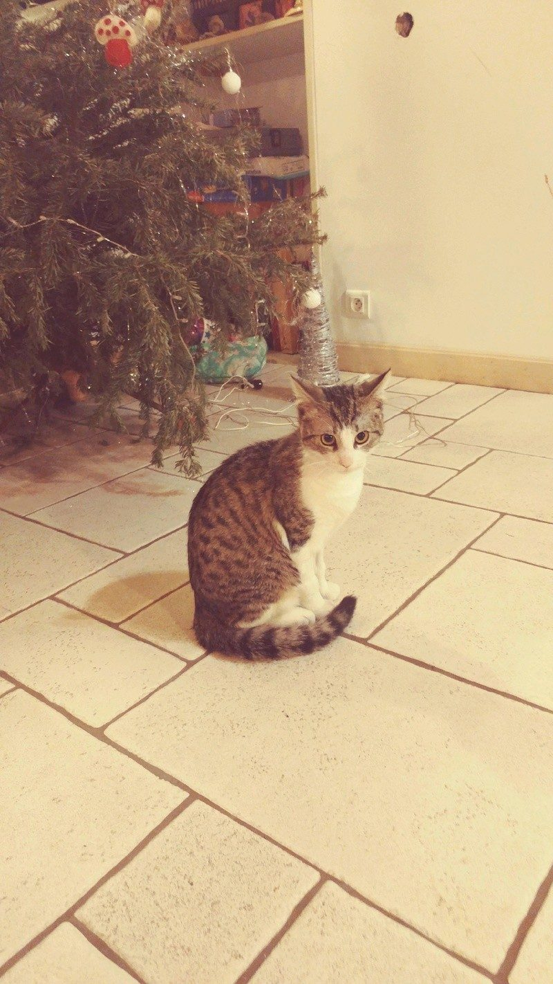 NASH – chat – 8 mois – «petit guerrier de la vie»