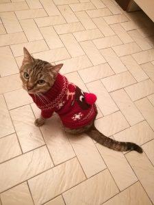 LILOU - 5 ans - jolie chatte très câline