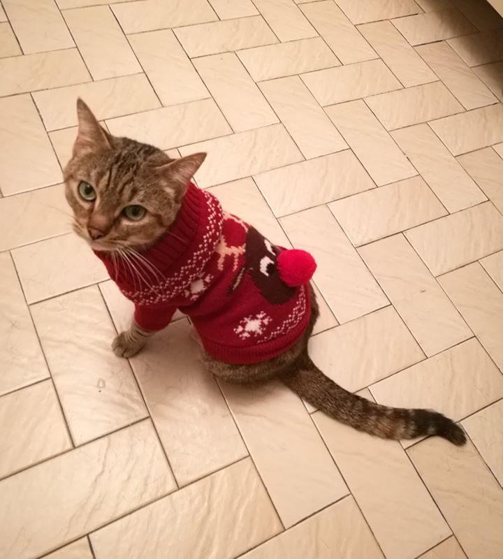 LILOU – 5 ans – jolie chatte très câline