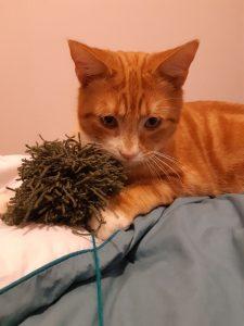 LOTUS - 1 an - jeune chat pot de colle mais réservé