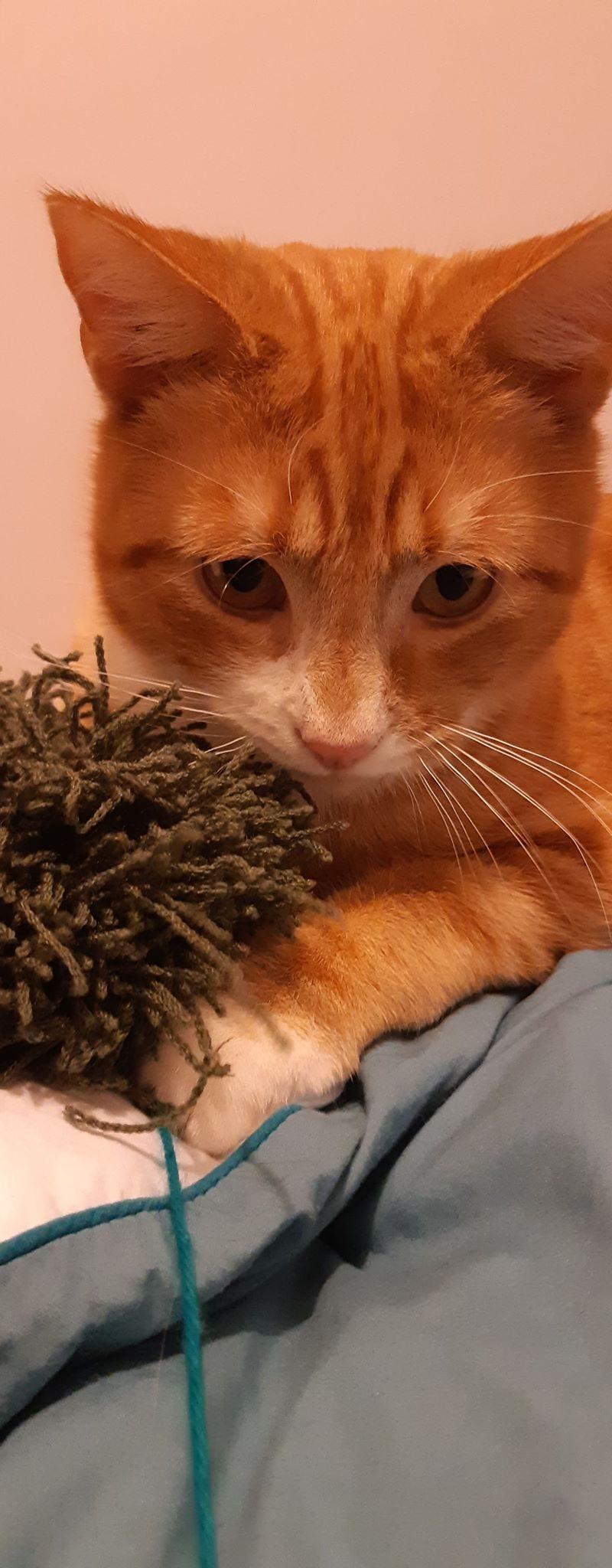 LOTUS – 1 an – jeune chat pot de colle mais réservé