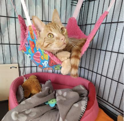 LUCKY – né le 01/09/2019 – jeune chat
