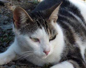 MARGUERITE - 2 ans - chatonne toute fine