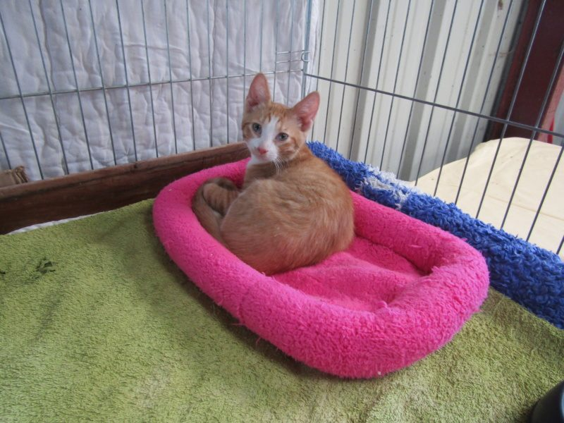 OWEN – 3 mois 1/2 – chaton intrépide